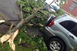 Emergency Tree Services Castle Hill