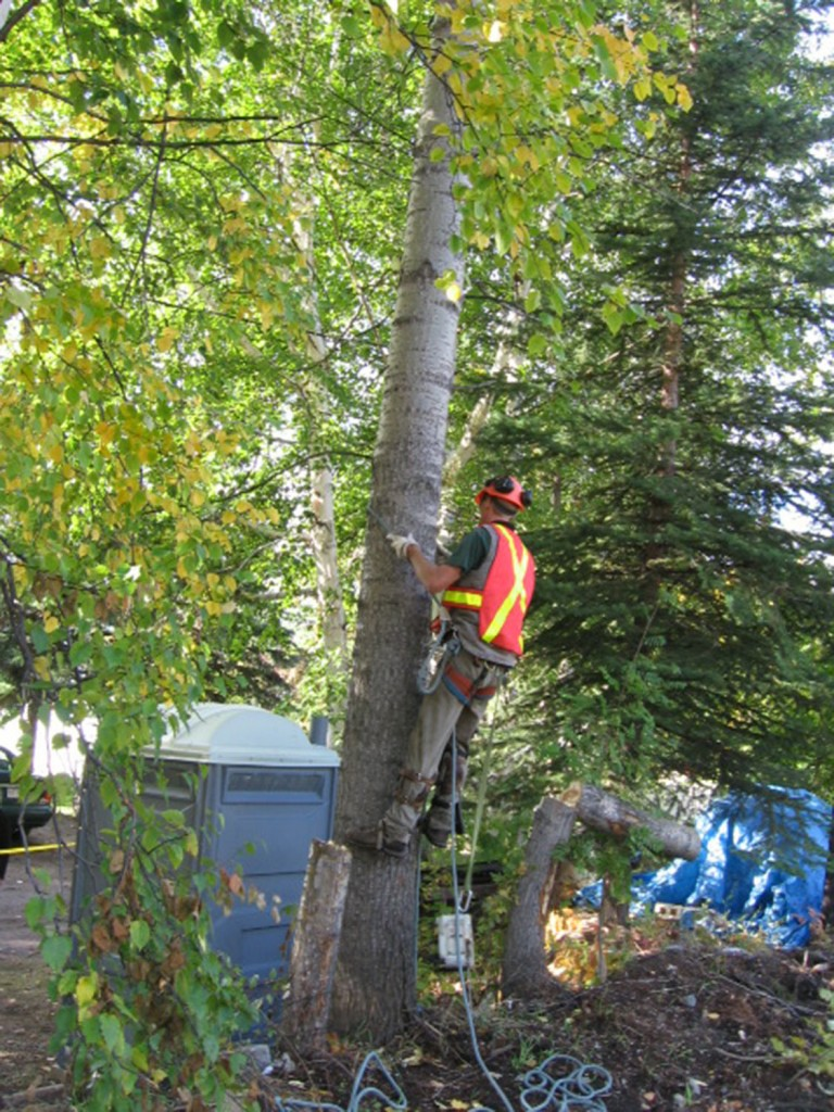 Tree Trimming & Pruning Services Queens Park