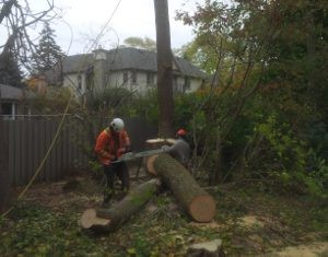 Tree Removal Bickley Vale