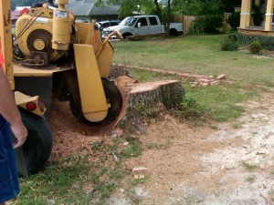 Stump Grinding Rose Bay
